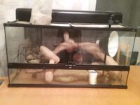 Vivarium 90 cm length, 18,5 cm high and 173/4 cm deep. £75 ono