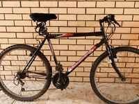 Adult mountain bike