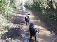Pet Care Services in Chippenham ~ Dog walking and pet visits tailored to your needs.