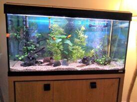 Fluval Roma 200 aquarium and cabinet