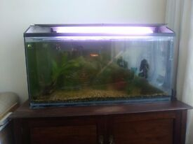 Fish and tank for sale.