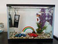 Starter Fish tank with Fish - FREE TO GOOD HOME -