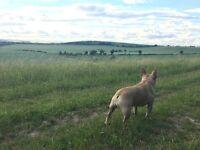 Dog Walking&Pets House Visting