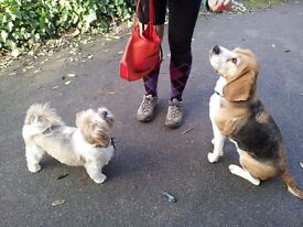 Friendly, Reliable & Experienced Dog Walker and Cat Sitter - Battersea, Vauxhall & Central London