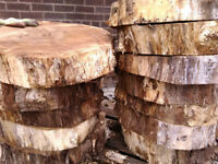 EXTRA LARGE LOG SLICES for garden stepping stones, wedding cake stands, coffee tables etc.