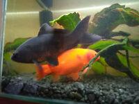 Pond Fish needing a new home