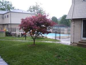 Pool on site! Large 3 Bedroom Townhouse on Lyndoch St, Corunna
