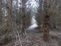 Approx 2 acres of standing timber (spruce/scots pine /douglas fir)