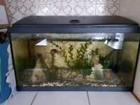 Fish tank with pump filter, fish ornaments