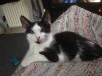 7 month old male kitten 💚