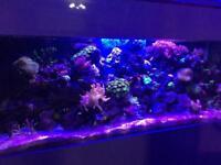 Coral and marine fish