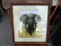 FRAMED PRINT OF A ELEPHANT BY DAVID SHEPHERD & IS SIGNED BY HIM IN EXCELLENT CONDITION £28