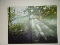 Very large canvas print of light through tree tops. Very good condition.