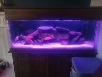 4ft fish tank, inc everything in setup