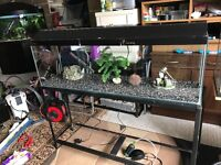 4 ft fish tank full set up with stand heater light lid air pump filter gravel ornament all work