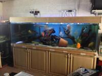 8ft fish tank