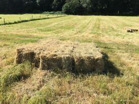 Fresh hay available (save your grass)