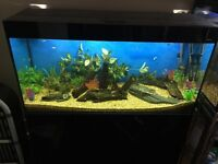 4foot fish tank