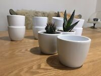 NEW 7CM Ceramic White Sucuulent Plant Pot, Cactus Pot