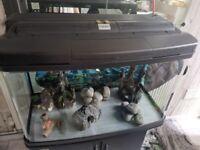 Fishtank and accessories