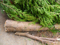 FREE WOOD from garden, ideal for fire place or barbecue.