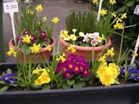 A few remaining, Planted Pots, Tubs, and Troughs, ideal gift for mother - prices from 1.75