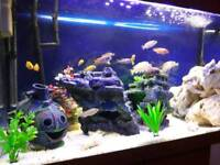 juwel rio 125 fish tank and cabinet including fish and accessories