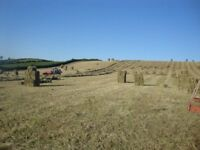 Hay, haylage, horses, ponies, stables, livery, equestrian, grass, grazing