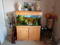 fish tank with fish and acessories