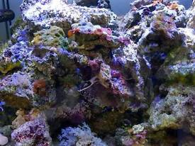 Live rocks and dry rocks for marine aquarium