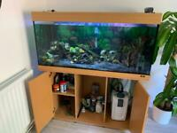 Juwel 350L fish tank with fish