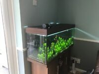 240L Juwel Rio fishtank with plants and fishes together