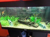 Juwel Rio 180 Aquarium and Cabinet with everything you need. Just add water and fish