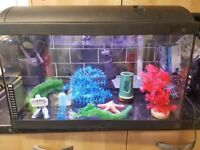 Fish tank with acessories