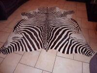 large genuine zebra hide
