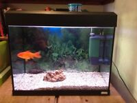 Fish Tank complete with fish, gravel, light and filter