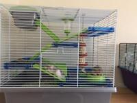 11 month old dwarf hamsters