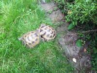 Tortoise escaped