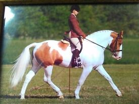 Offered - horse schooling