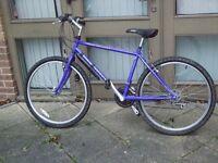 Shogun Mountain Bike for sale