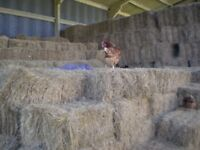 Hay bales forsale