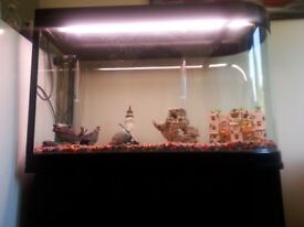 Tropical fish tank and accessories.