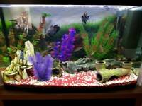 Aquarium and fish and cabinet