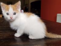 8 weeks male kittens looking for loving homes