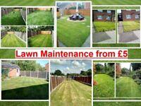 Garden Maintenance, Mowing, Hedges, Weeding, Turf, Slabs, Clearance, Skip, Tip, Gardener, Lawn