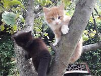 I have five Siberian kittens for sale