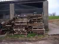 Firewood - pallets