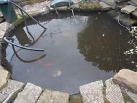 FILLING IN A 12 YEAR OLD POND ..EQUIPMENT... MATURE KOI CARP GOLD FISH ECT UP FOR SALE