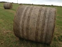 Excellent quality horse hay for sale