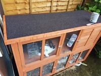 2x Rabbits for sale with hutch